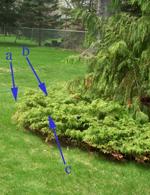 GardenAtoZ - Brave cuts to rug juniper