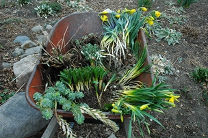 Gardenatoz Grow 510 Dividing Perennials Ash Garden A To Z