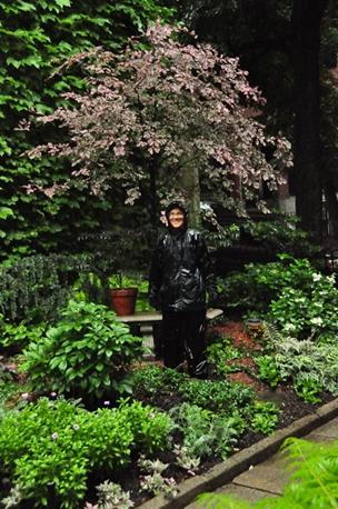Gardenatoz Prune To Keep A Tree Small Garden A To Z