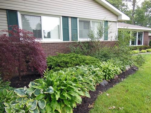 Gardenatoz Prune A Dwarf Lilac Garden A To Z