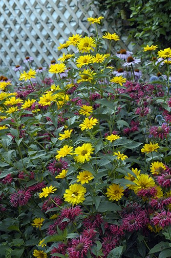 Gardenatoz What S Up 42 Vines And Fences Weedy Lawn