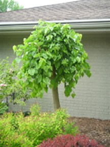 Gardenatoz Deadly Dense Mulberry Garden A To Z