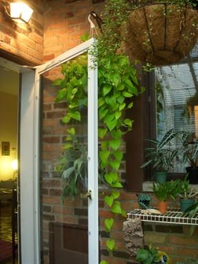 Gardenatoz Pothos And Philo Garden A To Z